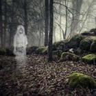 Ghost in foresta